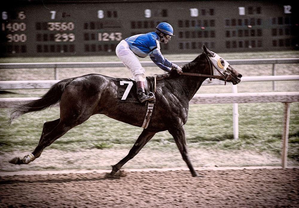 Race_Horse_-7_(14296943738)